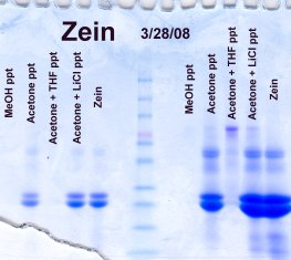precipitation of zein from phenol